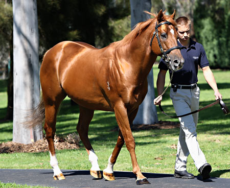 Coolmore's Royal Ascot hero Choisir pensioned - ANZ Bloodstock News